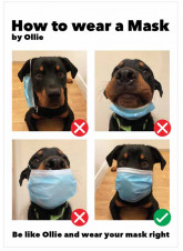 How to Wear a Mask by Ollie